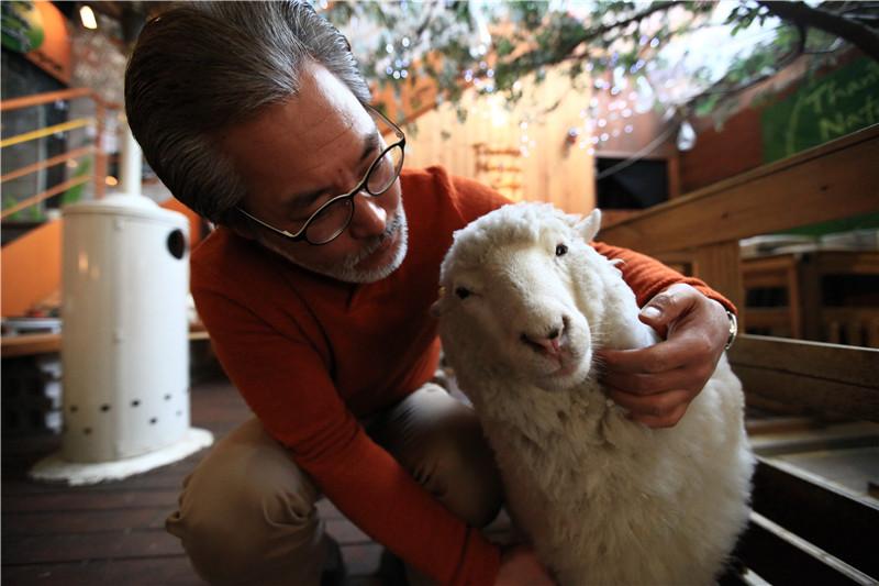 羊年綿羊餐廳走俏韓國