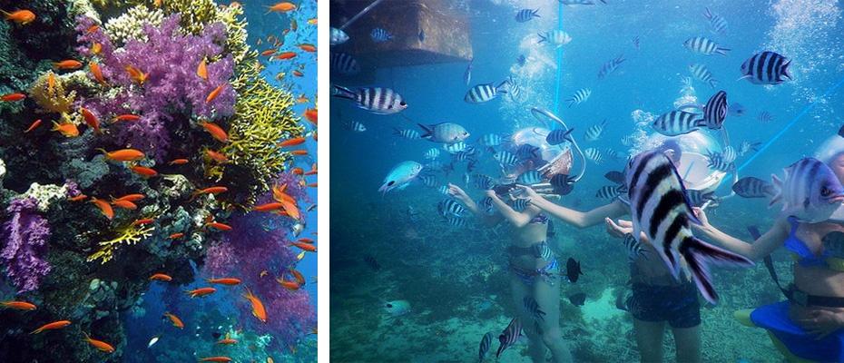 泰國芭堤雅格蘭島浮潛一日遊,芭堤雅格蘭島潛水一日遊,芭堤雅格蘭島水上活動,芭堤雅格蘭島海底漫步,芭堤雅格蘭島拖曳傘,芭堤雅格蘭島自由行,pattaya珊瑚島一日遊