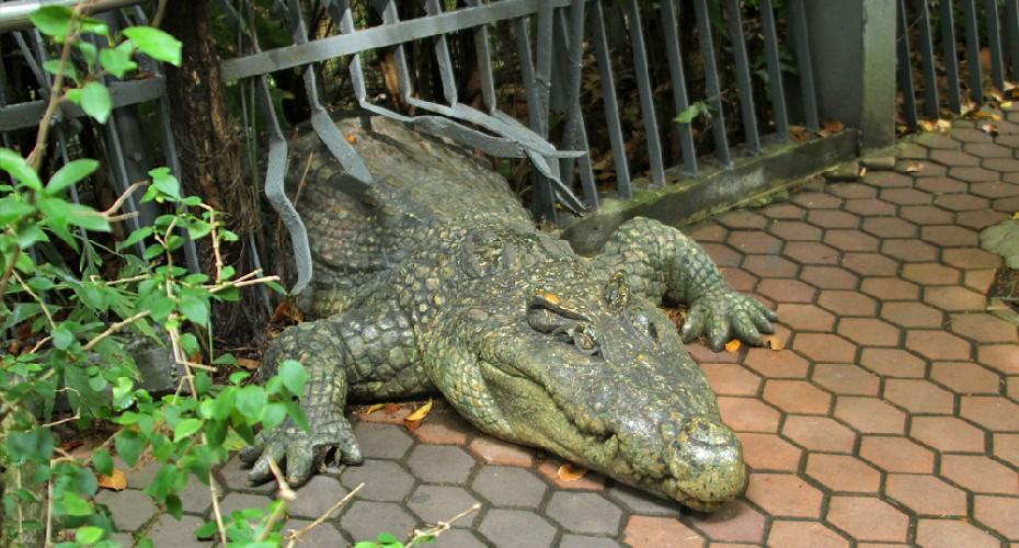 曼谷野生動物園門票