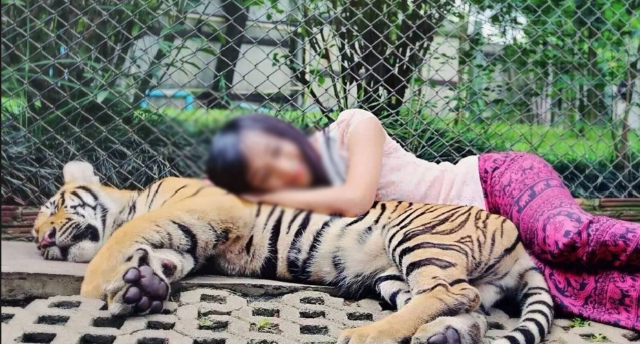 曼谷Safari World表演