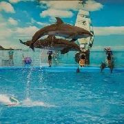 布吉島尼莫海豚館Dolphins Bay Phuket表演門票