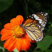 檳城Entopia蝴蝶公園門票