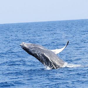 2020沖繩賞鯨半日遊(中文導遊)