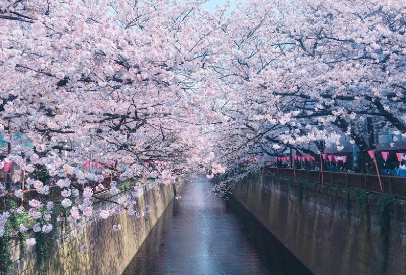 日本關東賞櫻線路精華景點推薦: