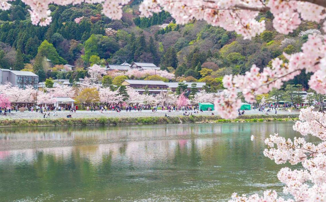 日本京都嵯峨野嵐山小火車車票(指定班次 京都領取)