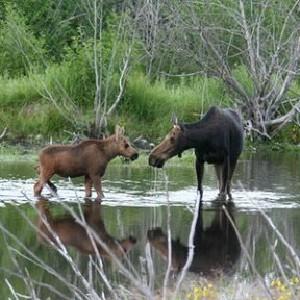 乘露天狩獵車探訪大提頓國家公園,搜尋野生動物的身影